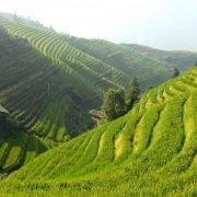 Exfoliante arroz 2